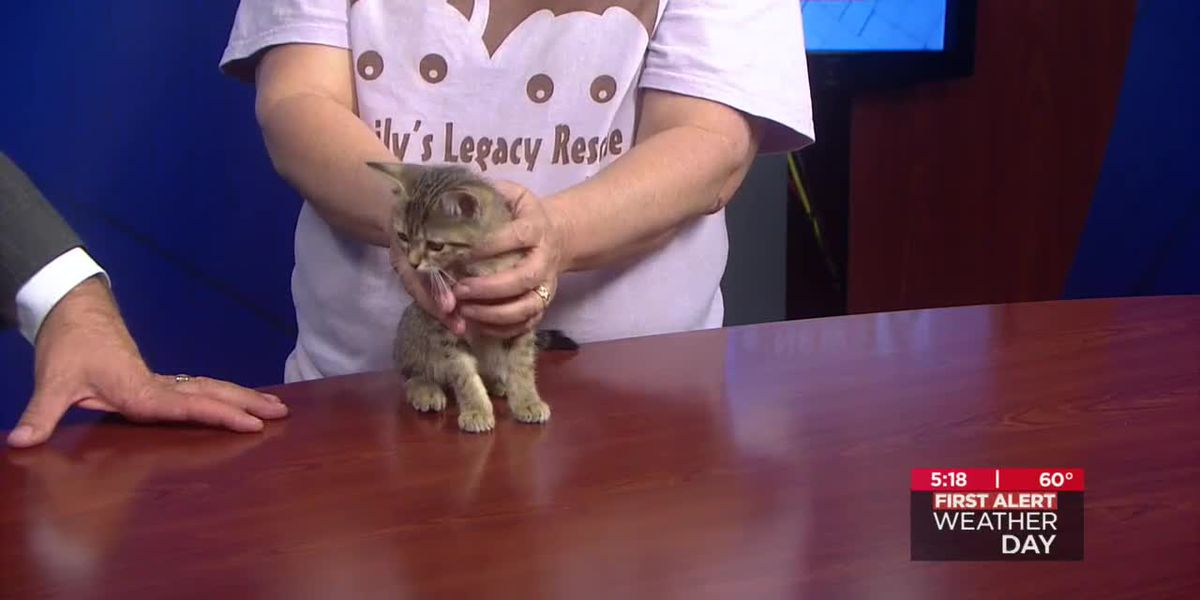 This kitten's name is straight out of a J.K. Rowling novel