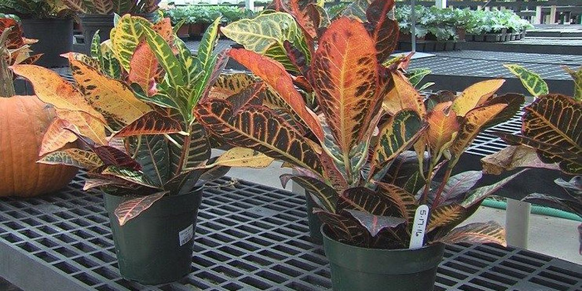 Popular Fall Plants