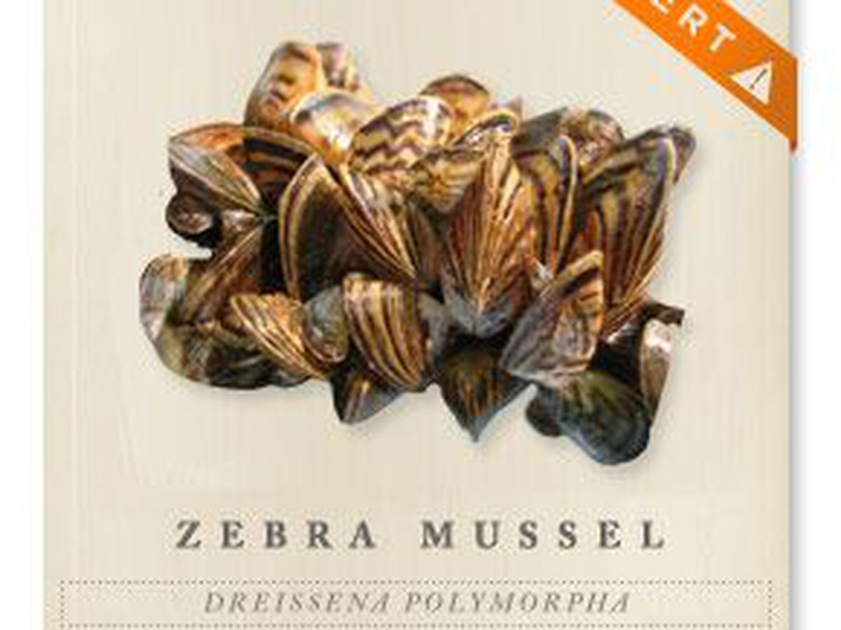 Parks and Wildlife warn zebra mussels could return