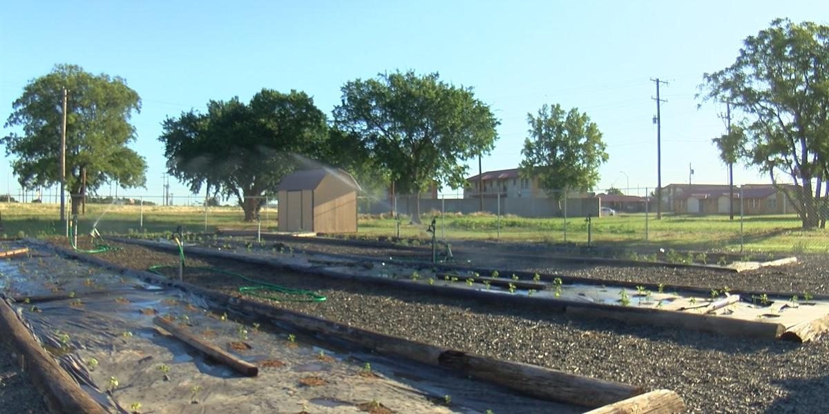 Vernon Community Garden revitalized, donations needed