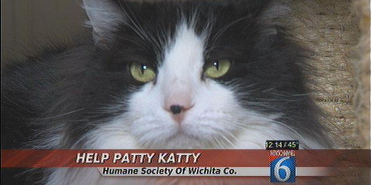 Patty Katty Needs A Forever Home