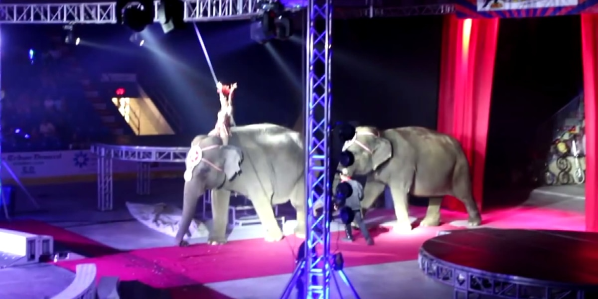 Local animal rights group plans to protest circus