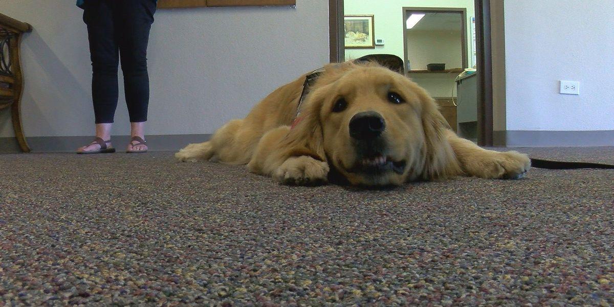 Heroes of Texoma: Comfort dog serves community