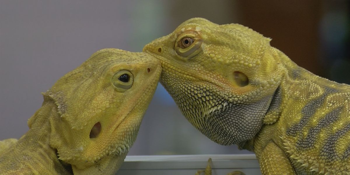 HERPS exotic animal show comes to WF