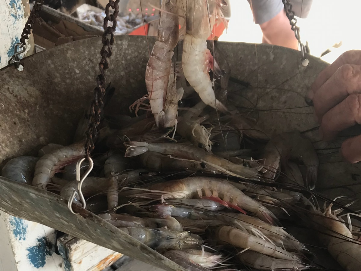 Untested Waters: Feds take small steps toward inspecting more seafood