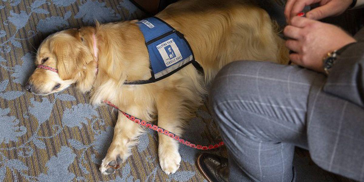 Service dog deception