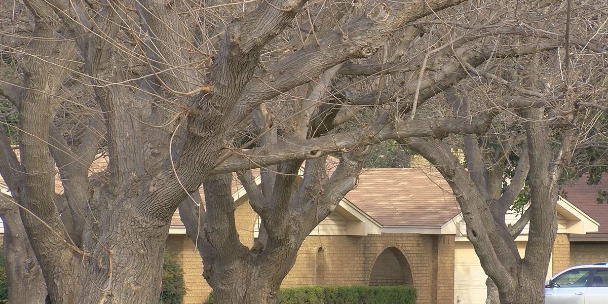 Winter tree care tactics