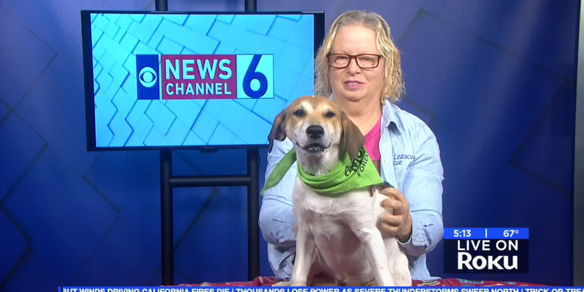 Kimber the puppy is ready to find a fur-ever family