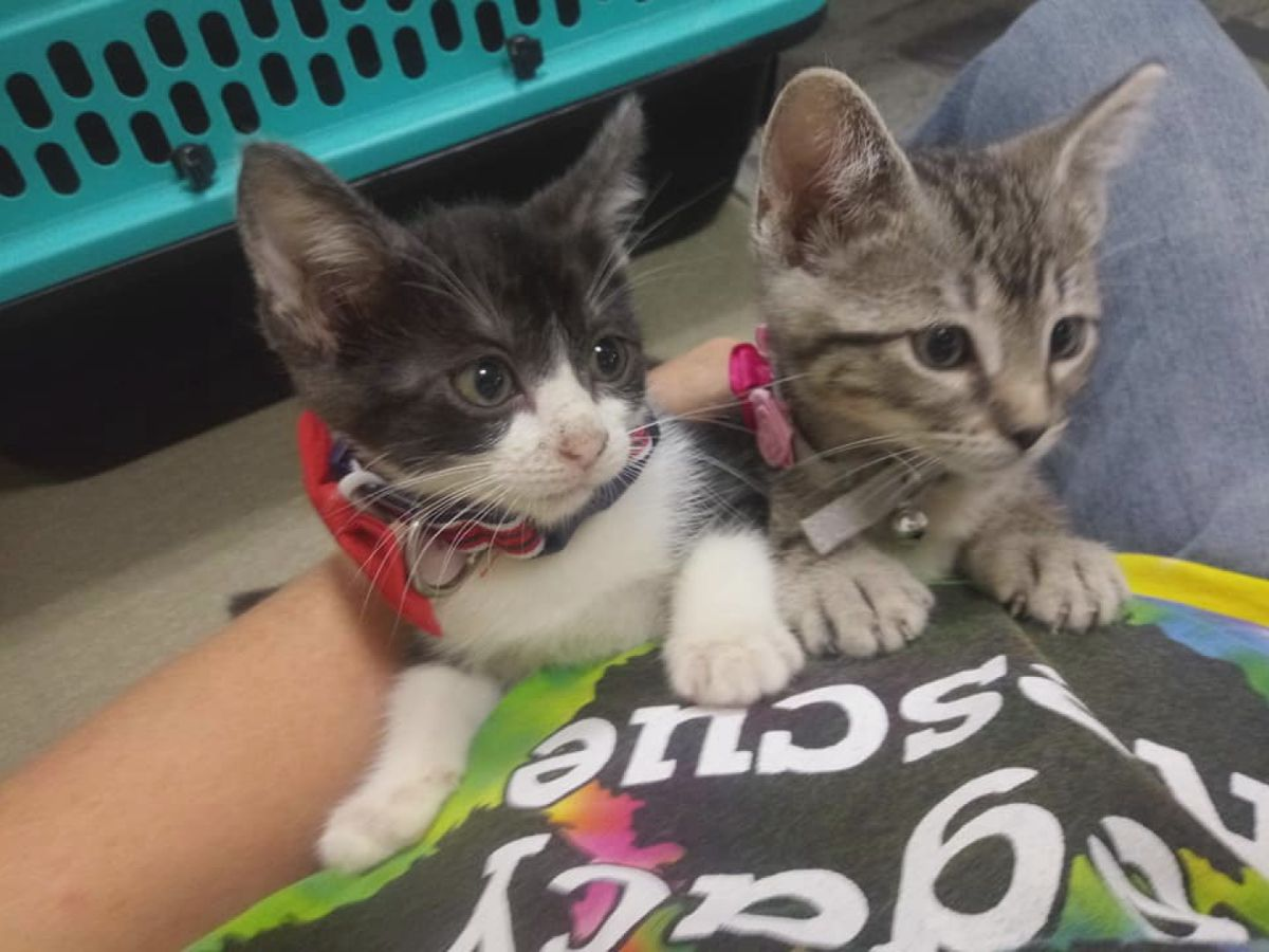 Chloe and Watson need their forever homes