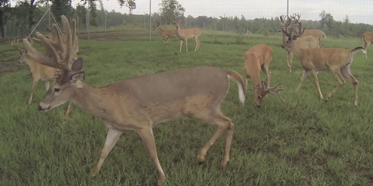 Deer to become issue on Texoma roadways