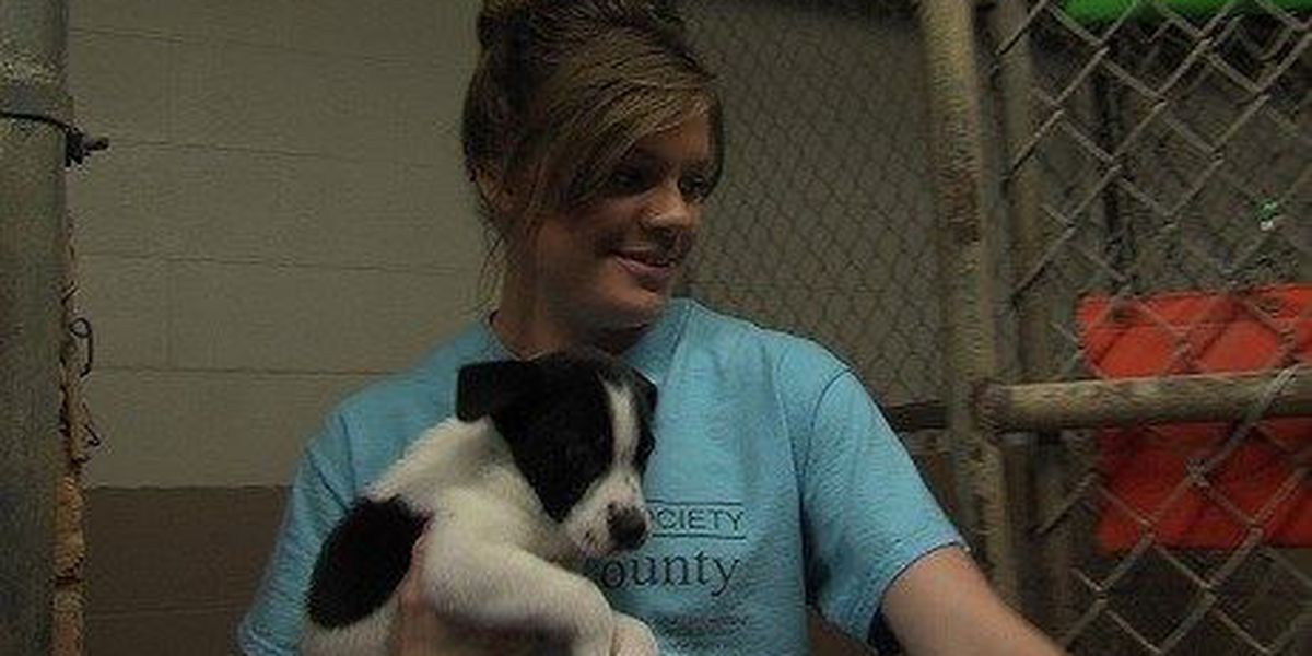 Humane Society Hopes To Raise Money To Stay Open