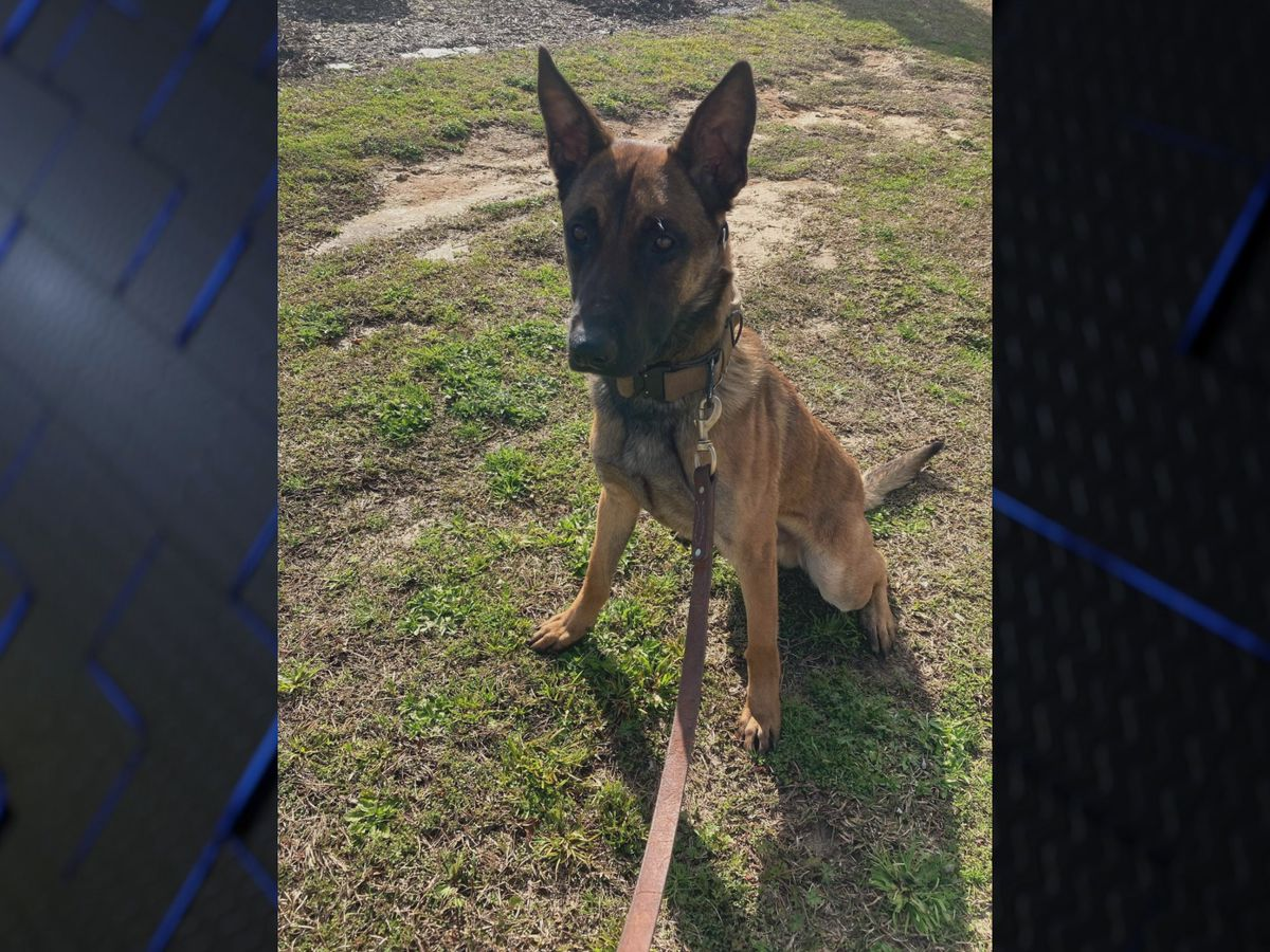 Lock, newest K-9 officer, makes first arrest