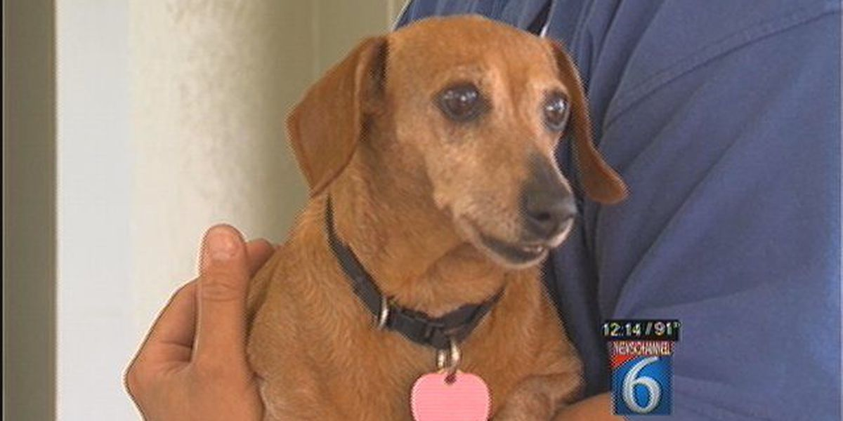 Daphne Is Our Pet Of The Week