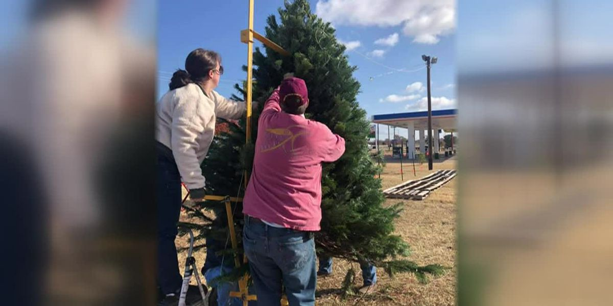 News Channel 6 City Guide: Optimist Club of Wichita Falls annual Christmas Tree Lot