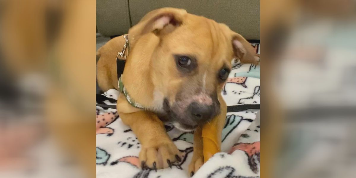 Miracle Boy is looking for a forever home