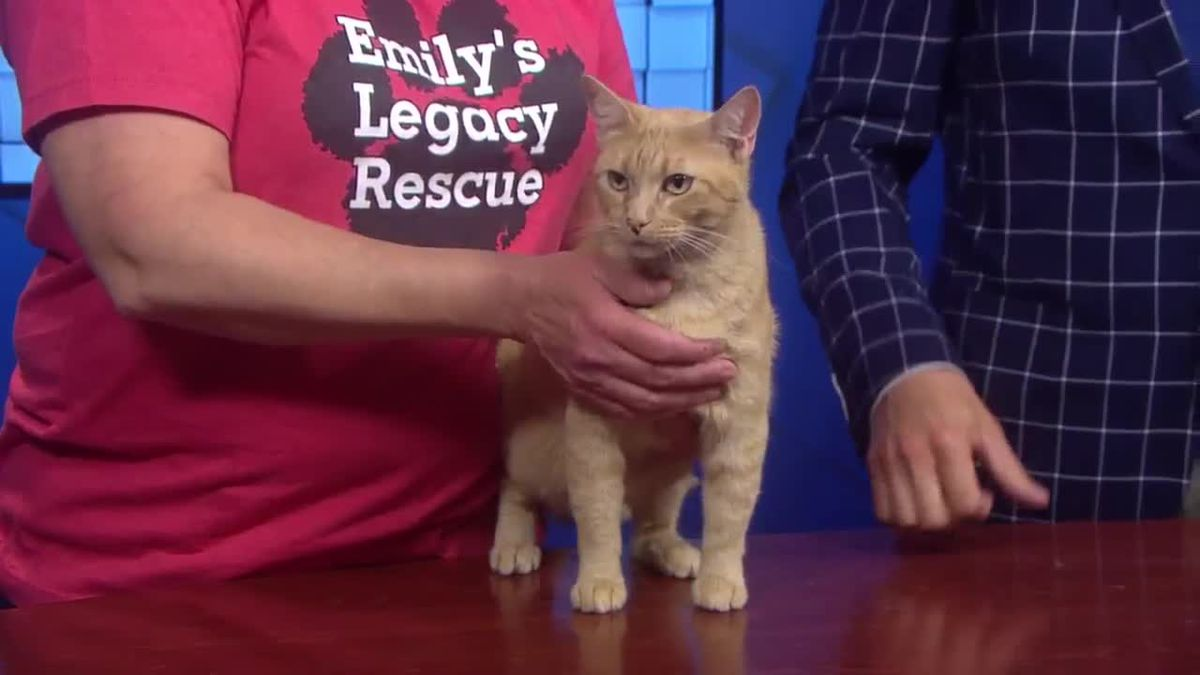 Dreamsicle is looking for her forever home
