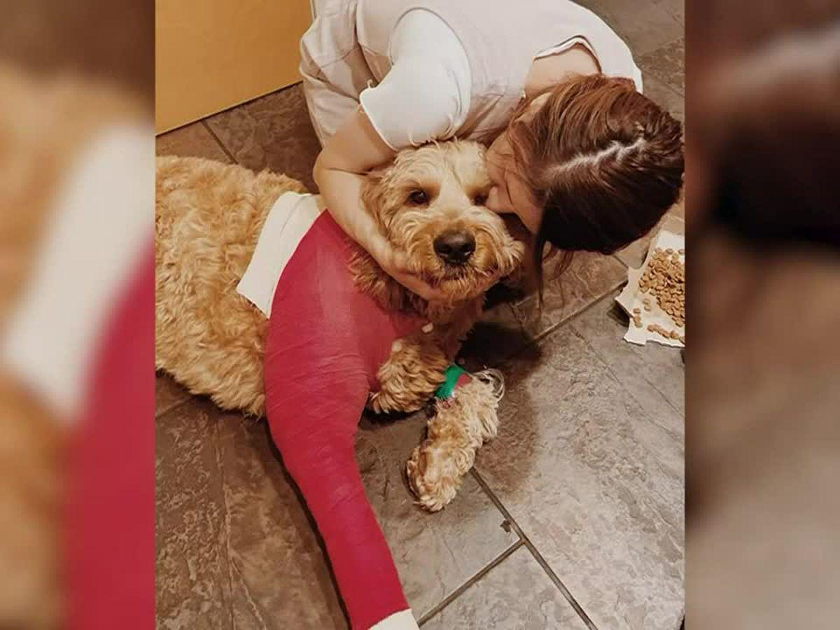 Arizona dog survives fall off 200-foot cliff