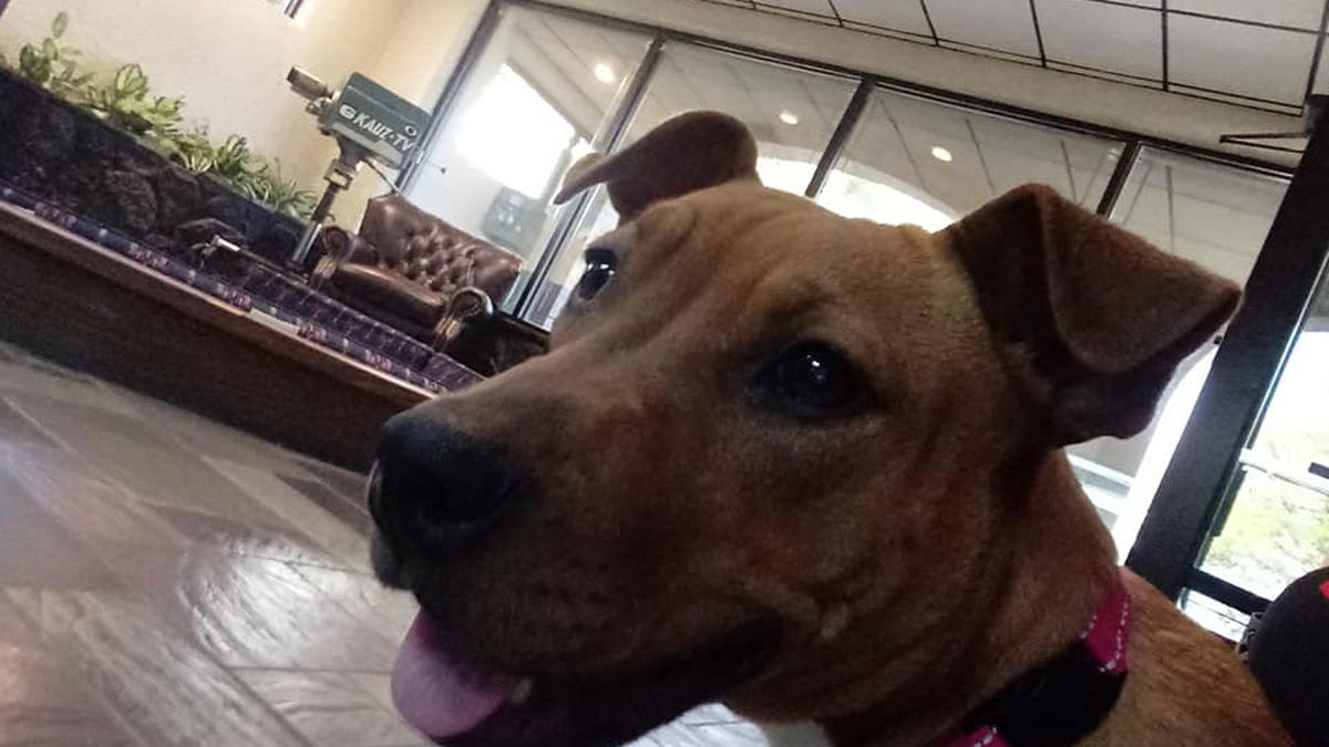 Maddie would like to find a fur-ever home