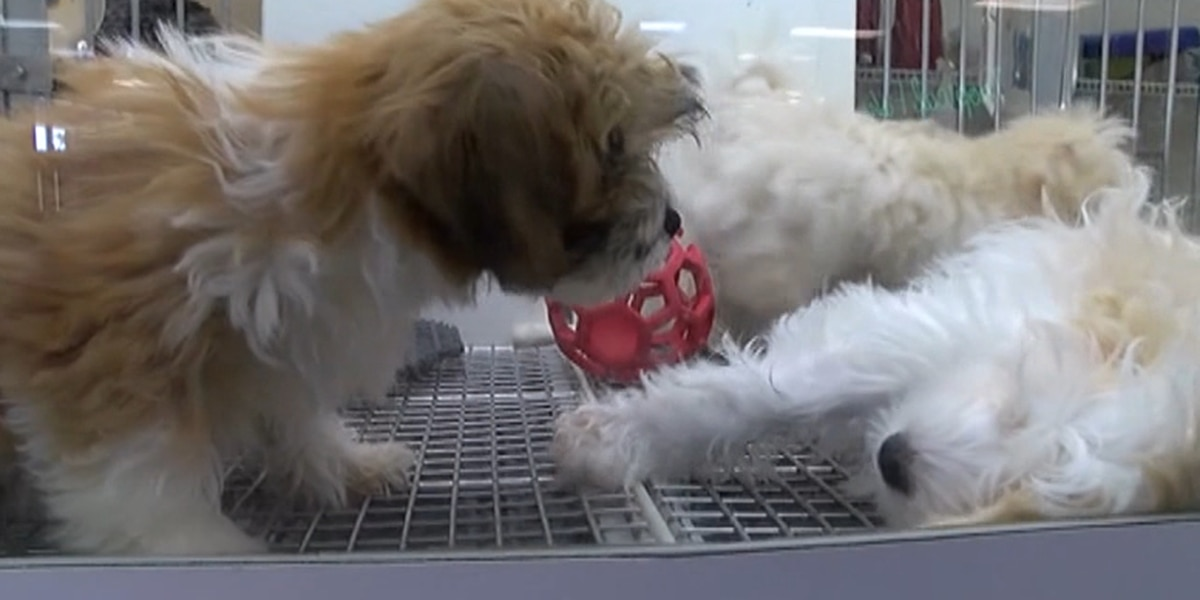 Texas House passes measure to protect animals from puppy mills