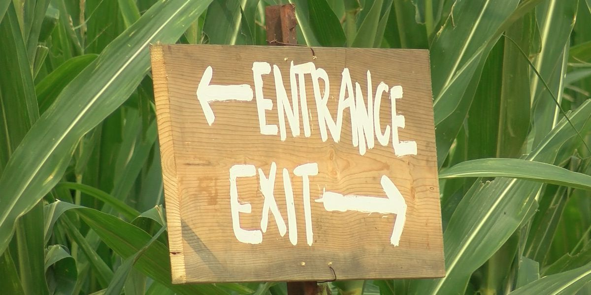 Corn maze provides families the perfect jump start to fall fun