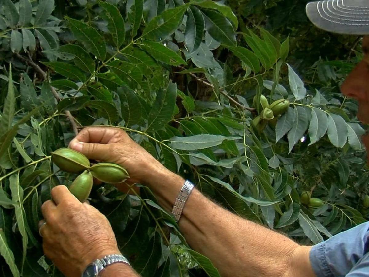 Texoma Farmers feel impact of U.S. and China trade war