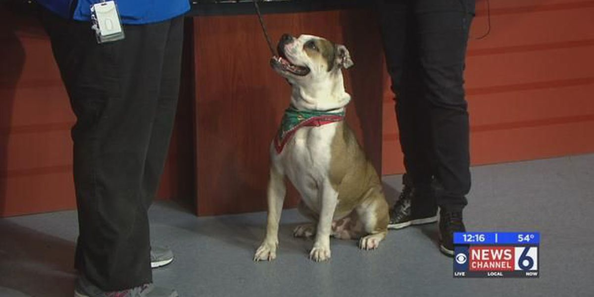 Adopt Bigsby for Christmas