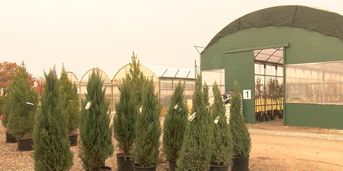Smith's Gardentown see increase in tree sales despite COVID-19