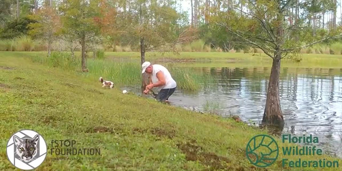 CAUGHT ON CAMERA: Man pries open alligator's mouth to save puppy