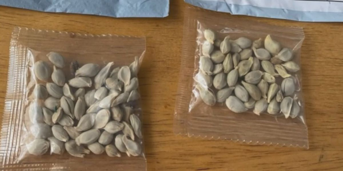 What to do if you get mystery seeds in the mail