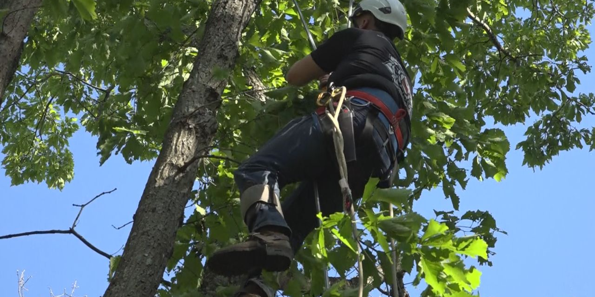 'George of the Valley': Va. man climbs 60-foot tree to rescue cat