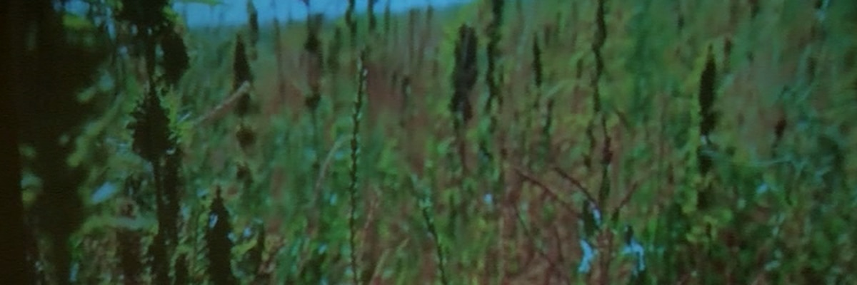 Hemp removed from Texas' controlled substance list