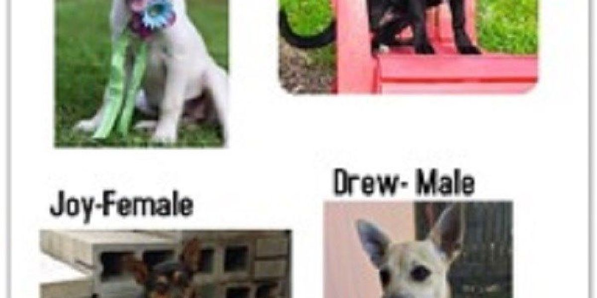 Dogs missing following collision