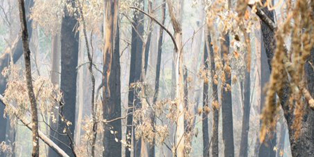 MSU student captures aftermath of Australian fires