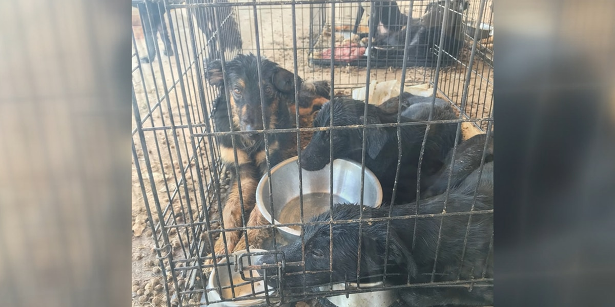 28 dogs recovered from Montague County home