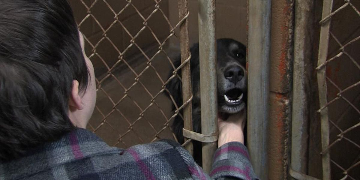 Pets Protected In Domestic Violence Cases