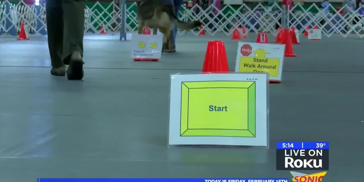 Obedience Training Clubs of Wichita Falls host trial