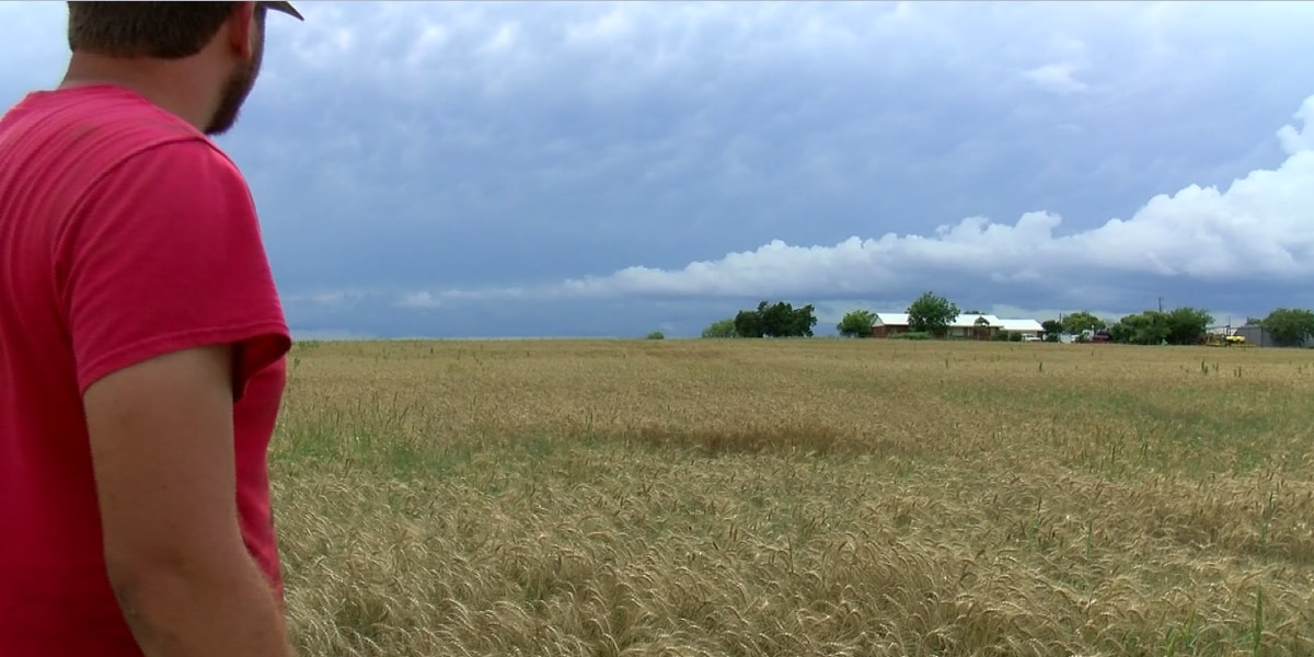 Rainy season makes planting and harvesting tough for Texoma farmers