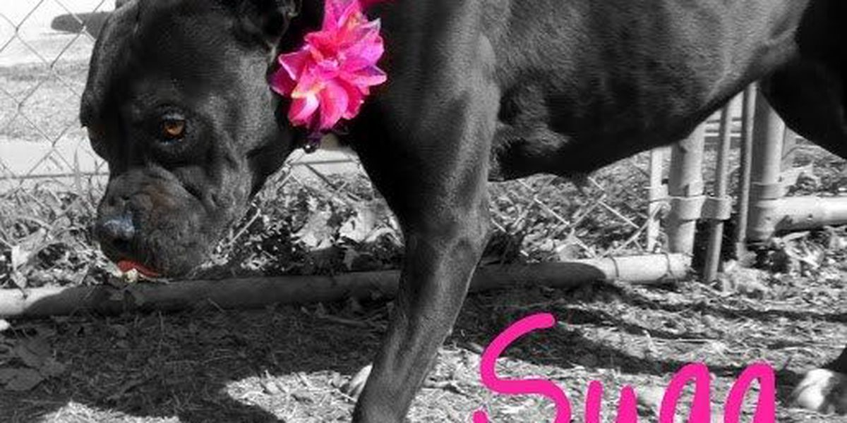 Sugg Needs A Forever Home!