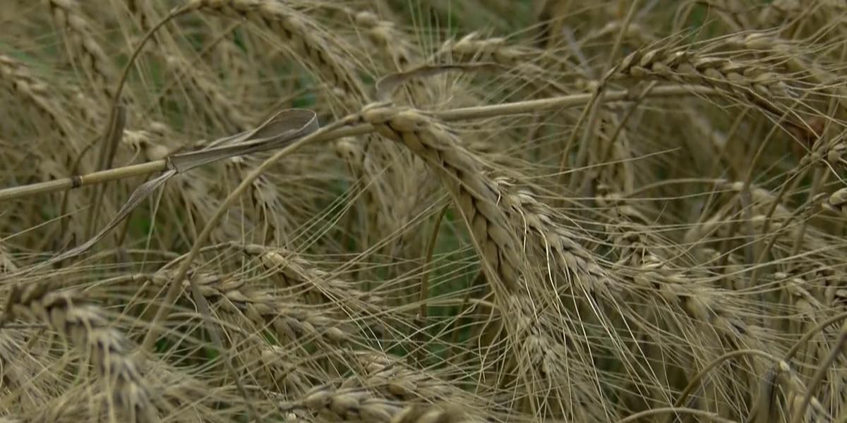 USMCA passes; Texas farmers relieved