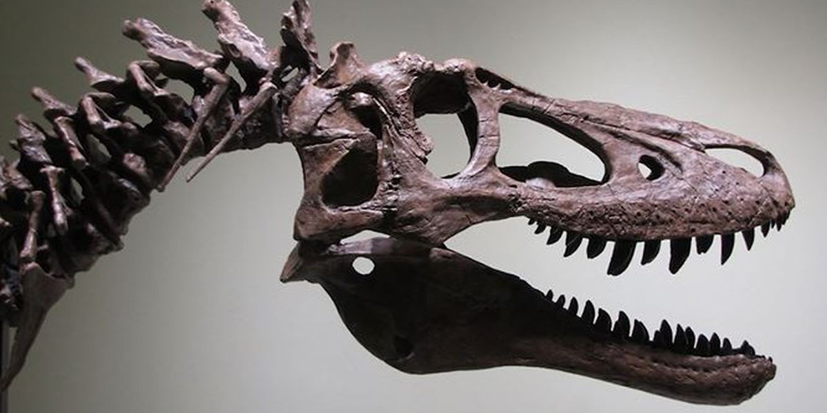 Baby T Rex Fossil Up For Auction On Ebay