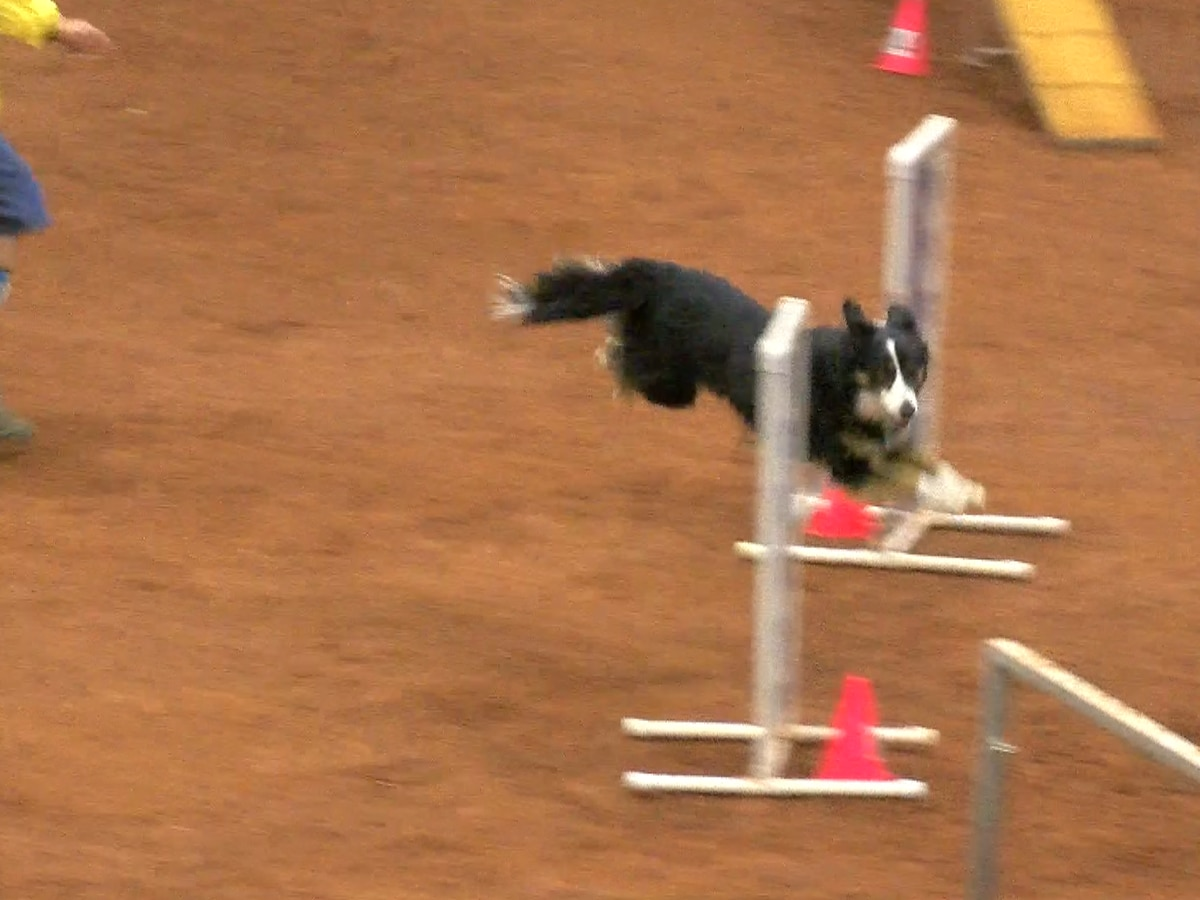 Dogs of all backgrounds take home agility titles