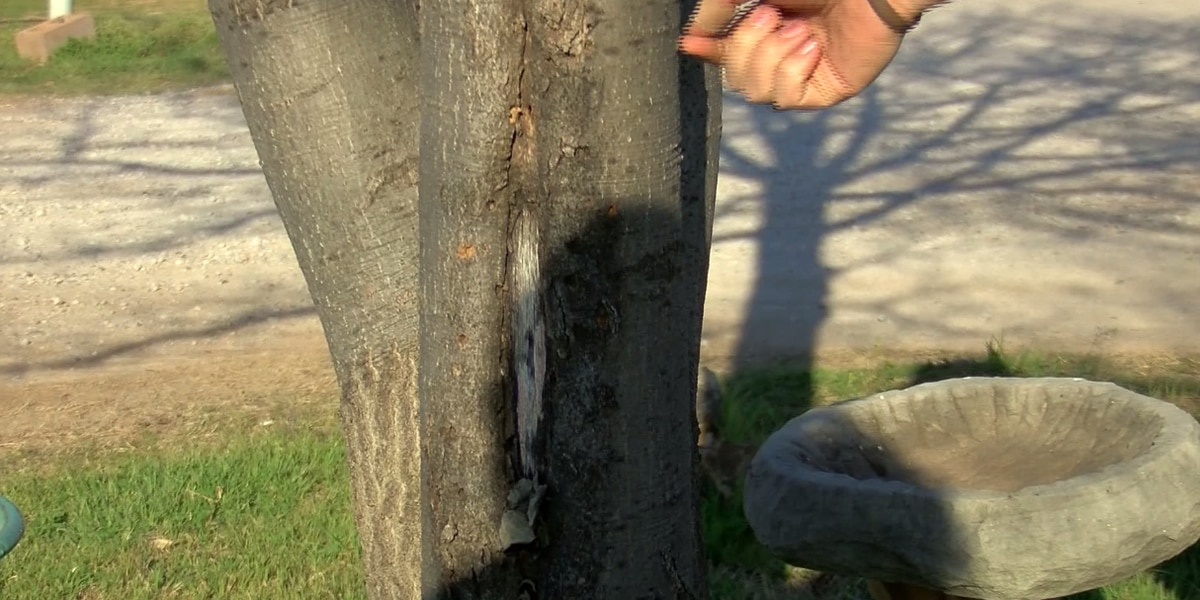 Tips on preventing pests in trees for spring