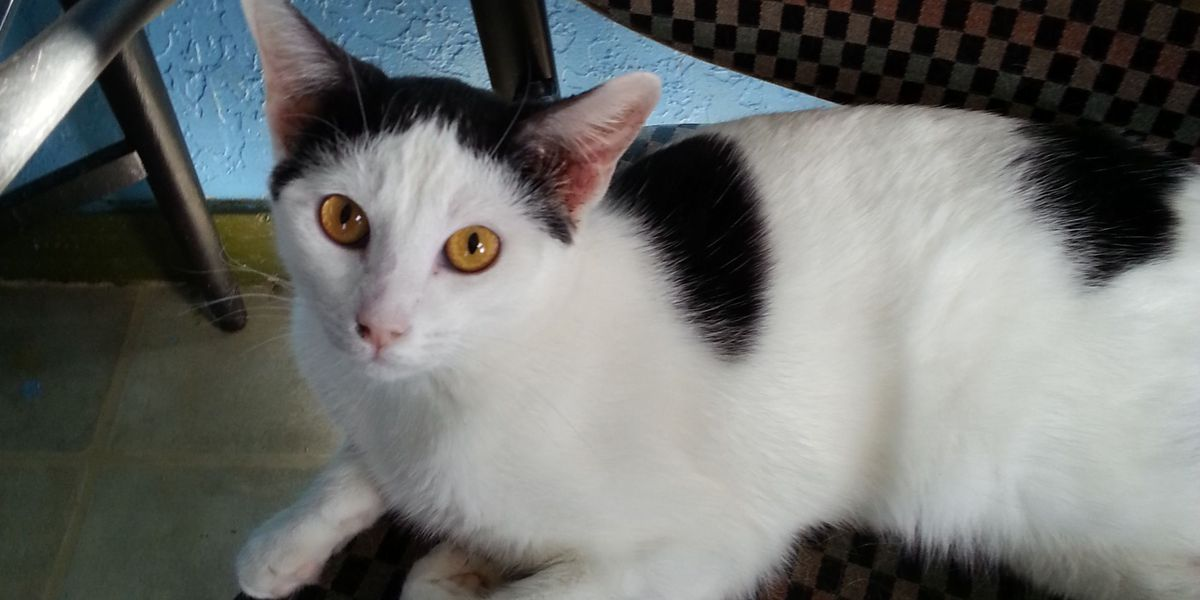 Domino Needs A Loving Home!