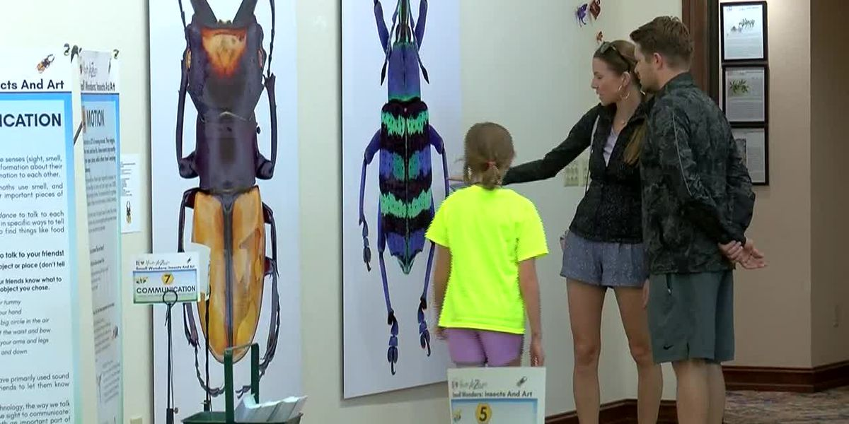 News Channel 6 City Guide: ArtZeum! Interactive Kids' Gallery