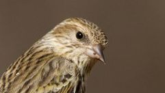 Biologists advise cleaning feeders to prevent spread of disease among birds