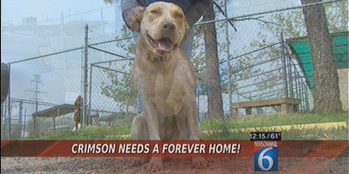 Crimson Needs A Forever Home!