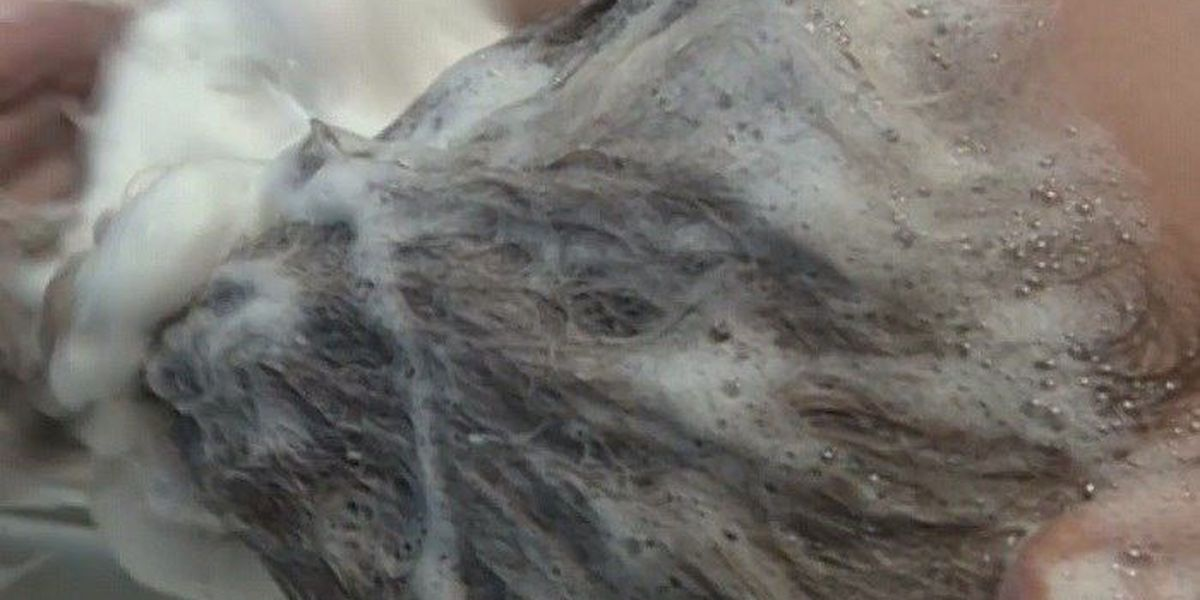 WFISD adjusts to new lice law